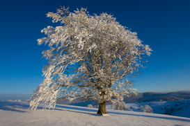 Bomen & boomkruinen Foto's bijv. als canvasfoto of wandfoto achter acrylglas: Snow covered tree on Schauinsland, Germany