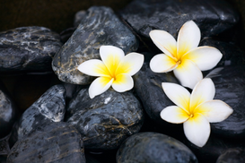 Bestselling Pictures Wall Art as Canvas, Acrylic or Metal Print Frangipani flowers and spa stones