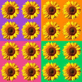 Flower pictures Wall Art as Canvas, Acrylic or Metal Print Sonnenblumen