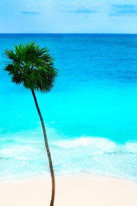 Palmen Foto's bijv. als canvasfoto of wandfoto achter acrylglas: Palm tree on a beach in Mexico