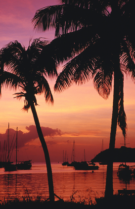 Palmen Foto's bijv. als canvasfoto of wandfoto achter acrylglas: Palm trees & boats on the Lagoon silhouetted at sunset.
