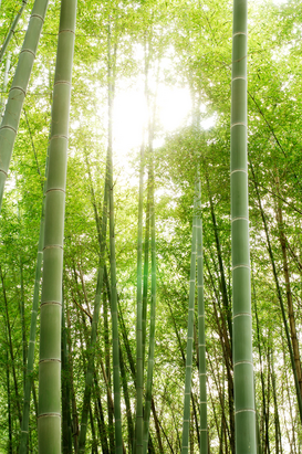 Bestselling Pictures Wall Art as Canvas, Acrylic or Metal Print Bamboo forest at Fushimi Inari Shrine.