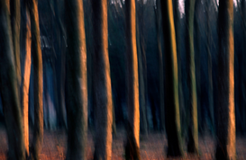 Tree & plant pictures Wall Art as Canvas, Acrylic or Metal Print Beech Forest / Buchenwald