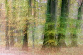 Forest pictures Wall Art as Canvas, Acrylic or Metal Print Herbst im Siebentischwald