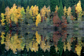 Fall pictures Wall Art as Canvas, Acrylic or Metal Print Herbstwald spiegelt sich im Stausee