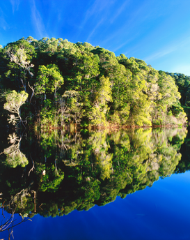 Bomen & planten Foto's bijv. als canvasfoto of wandfoto achter acrylglas: Rainforest reflected in Lake Eacham.