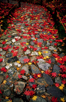 Fall pictures Wall Art as Canvas, Acrylic or Metal Print Autumn leaves on stones at Saiho-ji.