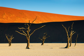 Foto: Bomen & boomkruinen - Bare trees at Dead Vlei