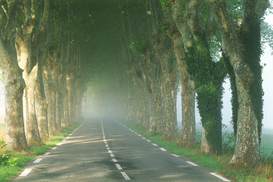 Foto: Bomen & boomkruinen - france provence tree lined road on a foggy morning