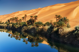 Foto: Palmen - Dune rising from Um el Ma Lake