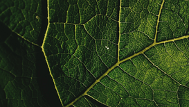 EyeEm pictures Wall Art as Canvas, Acrylic or Metal Print Full Frame Shot Of Leaf