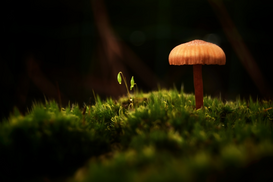 EyeEm Immagini p.ej., como imagen en lienzo o para la pared en metacrilato: CLOSE-UP OF MUSHROOM GROWING ON FIELD
