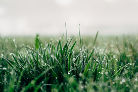 EyeEm Bilder z.B als Leinwandbild oder Wandbild hinter Acrylglas: Close-Up Of Wet Grassy Field Against Sky