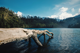 EyeEm Landscape pictures Wall Art as Canvas, Acrylic or Metal Print Dry Tree Log On Lake Shore