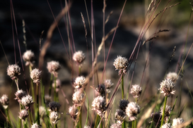 EyeEm Immagini p.ej., como imagen en lienzo o para la pared en metacrilato: Flowers on a meadow in autumn