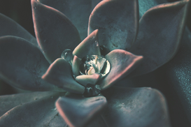 EyeEm pictures Wall Art as Canvas, Acrylic or Metal Print Full Frame Shot Of Succulent Plant