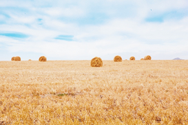 EyeEm Landscape pictures Wall Art as Canvas, Acrylic or Metal Print Haybales In Field