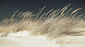Editor′s Choice Pictures Wall Art as Canvas, Acrylic or Metal Print Plants Growing On Sand