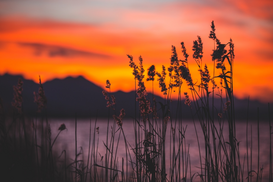EyeEm pictures Wall Art as Canvas, Acrylic or Metal Print Plants On Lakeshore Against Orange Cloudy Sky