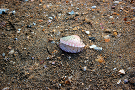 EyeEm Landscape pictures Wall Art as Canvas, Acrylic or Metal Print Seashell