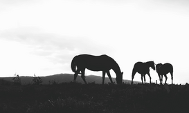 EyeEm pictures Wall Art as Canvas, Acrylic or Metal Print Silhouette Horses On Field Against Sky