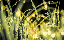 Editor′s Choice Pictures Wall Art as Canvas, Acrylic or Metal Print Sunlight Falling On Wet Grasses