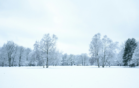 EyeEm Landscape pictures Wall Art as Canvas, Acrylic or Metal Print Trees On Snow Covered Landscape