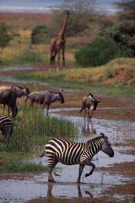 Foto: Wilde dieren - African Animals Gathering Near Water