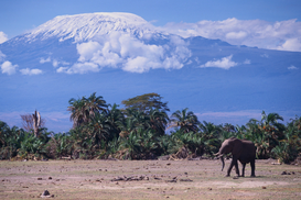Foto: Wilde dieren - Mount Kilimanjaro, Seen from Amboseli National Park