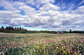 Pictures of fields & meadows  Wall Art as Canvas, Acrylic or Metal Print Finnland, Finland, Landschaft