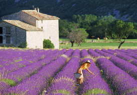 Landschappen Foto's bijv. als canvasfoto of wandfoto achter acrylglas: french woman with hat and basket in field of lavender in provence, france