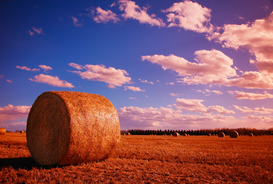 Pictures of fields & meadows  Wall Art as Canvas, Acrylic or Metal Print Hay bales in field