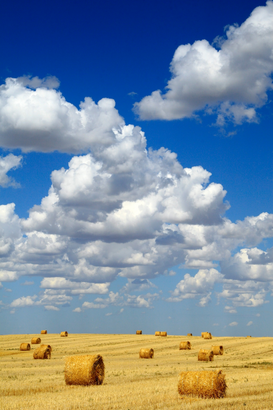 Bestselling Pictures Wall Art as Canvas, Acrylic or Metal Print Hay bales with white clouds