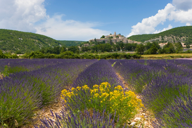 Pictures of fields & meadows  Wall Art as Canvas, Acrylic or Metal Print Lavender fields, Banon, France