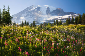 World travel pictures Wall Art as Canvas, Acrylic or Metal Print Mount rainier
