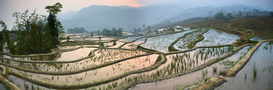Landscape pictures Wall Art as Canvas, Acrylic or Metal Print Yuanyang rice paddies, China