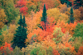 Fall pictures Wall Art as Canvas, Acrylic or Metal Print Mischwald im Herbst