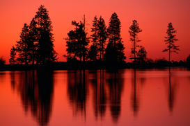 Landscape pictures Wall Art as Canvas, Acrylic or Metal Print Reflected, silhouetted trees in Morgan Lake at sunset