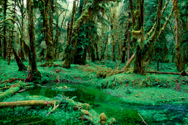 Landscape pictures Wall Art as Canvas, Acrylic or Metal Print Temporate Rain Forest / Temperierter Regenwald