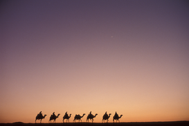 Foto: Reis om de wereld - egypt - caravan at sunset