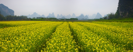 Foto: Velden & weiden - Crops with mountains in the distance, Guilin, China