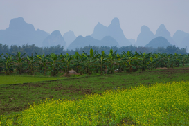 Foto: Velden & weiden - Mountains in the mist, Guilin, China