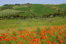 Foto: Velden & weiden - Poppies and farmland, La Foce, Italy