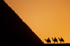 Foto: Woestijn - egypt, giza. pyramids and camels at sunset