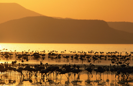 Foto: Zonnefoto's - Flamingos am Lake Abiata