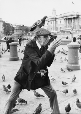 People pictures Wall Art as Canvas, Acrylic or Metal Print Gentleman photographer in Trafalgar Square with Pigeons