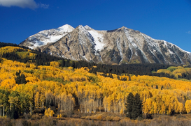 Foto: Viaje por el mundo - Aspen trees in autumn, Rocky Mountains, Colorado, USA