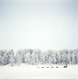 Winter Foto's bijv. als canvasfoto of wandfoto achter acrylglas: Dog sledding in thick snowy forest