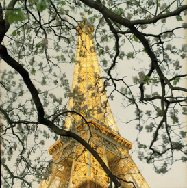 Paris Bilder z.B als Leinwandbild oder Wandbild hinter Acrylglas: Eiffel tower through tree;low angle view