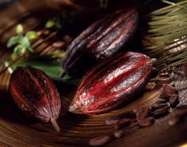 Wine & Food Pictures for Your Kitchen Wall Art as Canvas, Acrylic or Metal Print cocoa bean pod